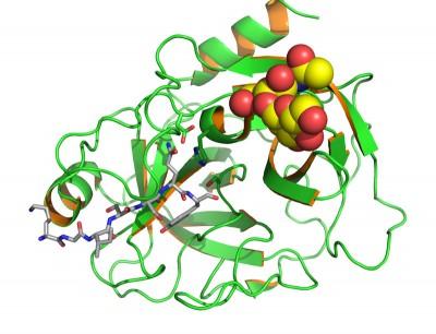 PSA, estructura molecular